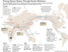 The predominant theory is that modern humans evolved in Africa and then migrated through the Middle East to Europe and Asia, beginning some time between 40,000 and 60,000 years ago. What was the route for early humans into the Americas? Scientists compare the DNA of indigenous people in the New World with that of people in Europe and Asia, looking for similarities. The more alike two people's DNA, the more closely related they are - it's as if tiny maps of our ancient origins are hidden…