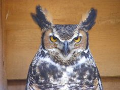 Mountsberg Park Milton Ontario Milton Ontario, Travel And Tourism, Outdoor Travel, The Great Outdoors, Road Trip, Owl, Bird, Owls, Outdoor Living