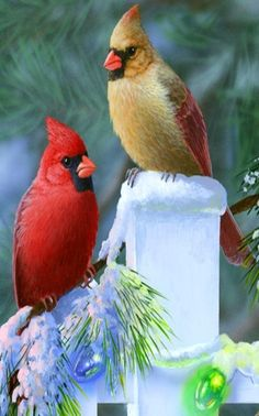 Cardinals - HI GUYS!! - O.K......WE KNOW WHO IS THE BEST LOOKING!! (Don't forget your wife isn't too bad either!!)