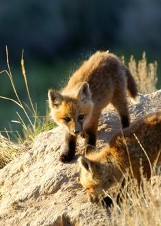 ☀The staff in BLM Idaho spotted these little guys near Pocatello.