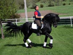 What If You Could Have It All... Zorro, standing at stud
