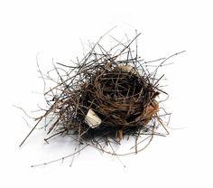 Empty nest by Mary Jo Hoffman