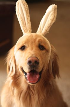 Happy Easter, Love Finn.