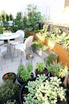 Leah & Matt's Enviable Rooftop Oasis Terrace Garden, Garden Planters, Small Terrace, Balcony Gardening, Rooftop Patio, Rooftop Gardens, Small Outdoor Spaces, Small Spaces, Small Space Gardening