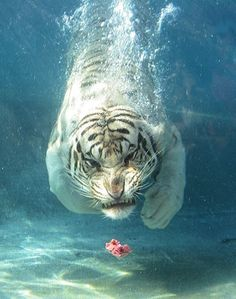inspire creatures