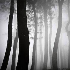 Forest Dance by Hengki Koentjoro