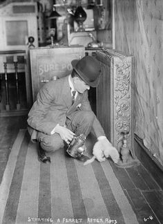 """RATS: New York: Rat catchers at work, using ferrets and """"rat dogs."""" Ca.1910."""