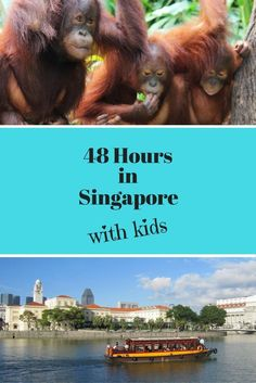 If you are planning a stopover in Singapore with kids, here we give you a Singapore itinerary with suggestions on what to do in Singapore in 48 hours with kids. Singapore With Kids, Singapore Zoo, Singapore Travel, Toddler Travel, Travel With Kids, Family Travel, Family Vacations, Singapore Itinerary, Packing For Europe