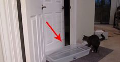 This Cat Has An Awesome Talent. No Door Can Stop Him.