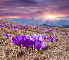 Choose to be happy in this moment. A Gentle Reflection by Nancy Gentle Boudrie of Awaken With Light, Inc. Saffron Crocus, Bonsai Plants, Blooming Plants, Outdoor Plants, Herb Garden, Amazing Nature, Nature Photos, Trees To Plant, Flower Pots