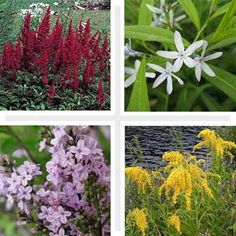 12 hardy ornamental garden plants that can weather even the worst neglect from those with black thumbs. | thisoldhouse.com
