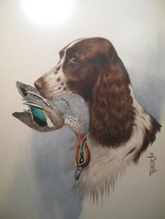Boris Riab watercolor painting depicting a Springer Spaniel with a duck in it's mouth. Beautiful Dog Pictures, Beautiful Dogs, Animals Beautiful, Cocker Spaniel Dog, English Springer Spaniel, Chien Springer, Digging Holes, Best Dog Breeds, Vintage Dog