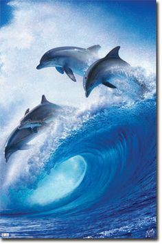 Lumba-lumba : lumba-lumba, Lumba, Ideas, Animals, Beautiful,, Dolphins,, Creatures