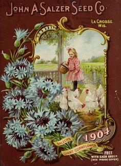 1904 - Salzer's1904 [catalogue] / - Biodiversity Heritage Library