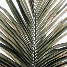 Tropical Island Adventures and Palmtrees. See more Untamed Island Inspiration Envers du Decor Plants Are Friends, Affinity Photo, Tropical Vibes, Tropical Design, Green Plants, Palm Plants, Phone Backgrounds, Belle Photo, Palm Trees