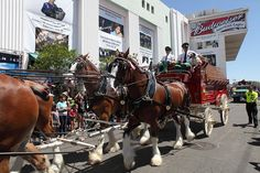 Budweiser Clydesdales L.A. County Fair  in Pomona, California. by Sam Howzit