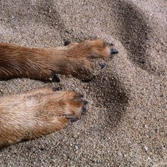 We all like our toes in the sand - even the 4 legged.