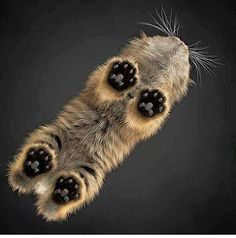 Paws                                                                                                                                                                                  More