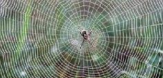Crônicas Americanas: Teia de aranha