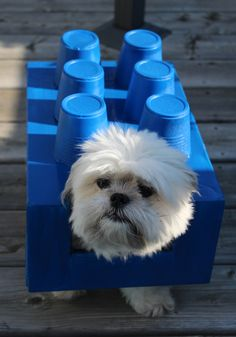Excitement is building for this DIY dog Halloween Costume. Turn your pooch into a Lego brick – and it all starts with an empty shoebox. Lego my Dogo! Cute Dog Costumes, Pet Halloween Costumes, Animal Costumes, Halloween Diy, Thor Halloween, Halloween Signs, Halloween 2020, Costume Ideas, Lego Dog