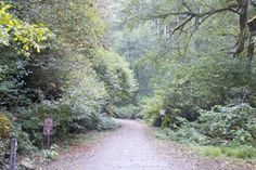Fern Canyon Trailhttp://www.cheers-2-wine.com/van-damme-state-park/ #hiking #California