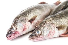 Wild Caught Walleye Pike Whole Fresh Fish 3 lbs Price: 14.85 Retail Price: 0.00 439 Isaacson and Stein Fish Co.       This Fresh Walleye Pike Whole Fish has rich pink color and succulent mild flavor. Wild-caught in Canada this 3-pound fish can be baked fried poached grilled saut?ed or broiled