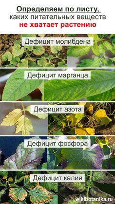 Small Farm, Flora, Plants, Garden, Garten, Planters, Gardening, Outdoor, Home Landscaping