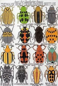 """Blackstock, Gregory L. """"The Major World Troublemaker Beetles"""", 2008 lead pencil, maker and crayon 95 x 65 cm © photo credit Collection de l'Art Brut, Lausanne Arte Elemental, Bug Art, Art Brut, Insect Art, Bugs And Insects, Middle School Art, Arts Ed, Outsider Art, Science Art"""