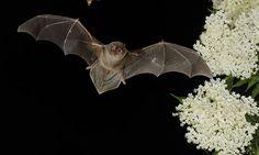 Spanish bat study shines new light on spread of coronavirus