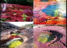 Five colors river Cano Cristales Colombia South America