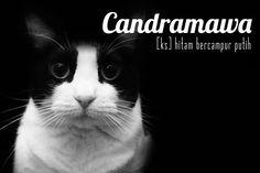 candramawa