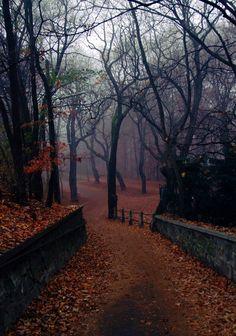 Image Nature, Autumn Cozy, Autumn Forest, Fall Winter, Forest Rain, Dark Autumn, Autumn Morning, Autumn Nature, Autumn Scenery