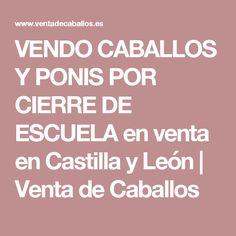 VENDO CABALLOS Y PONIS POR CIERRE DE ESCUELA en venta en Castilla y León | Venta de Caballos