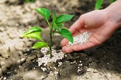 Know Your Fertilizers: Chemical vs. Organic, Crystals, Flowers, Nature, Plants, Garden Ideas, Van, Gardening, Naturaleza