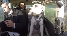 Este es el momento increíble en que una perrita salvada de la muerte se convirtió en el primer...