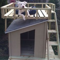 Easy Homesteading: Dog House with Roof Top Deck Plans