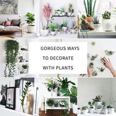 How to Decorate Your Interior with Green Indoor Plants and Save Money - http://www.interiordesign2014.com/home-design-ideas/how-to-decorate-your-interior-with-green-indoor-plants-and-save-money/
