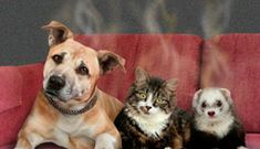 Best Air Purifier For Pets - Pet odor removal can be tough if you don't have what you need to accomplish it. No one likes the musty smell of pets. Go here now and find out how to get rid of dog smell forever. Dog Urine, Pet Odors, Pet Odor Remover, Pet Odor Eliminator, Toy Dog Breeds, Dog Smells, Military Dogs, Animal Projects, Therapy Dogs