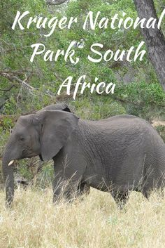 A story and destination guide for Kruger National Park, #SouthAfrica. #Africa #elephant #travel #safari