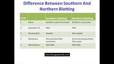 Difference Between Southern and Northern Blotting Techniques