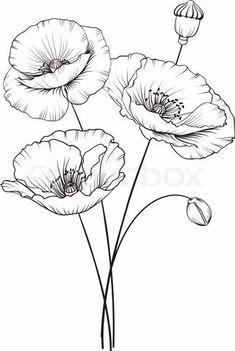 Colour Images Line Drawing Doodle Art Diy Art Emboss Poppies Dandelion Watercolour Art Projects Flower Art Drawing, Flower Line Drawings, Flower Sketches, Floral Drawing, Drawing Sketches, Poppy Drawing, Tattoo Sketches, Drawing Art, Watercolor Flowers