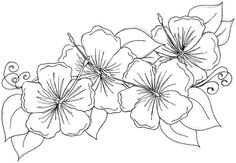 hibiscus coloring pages | Download Free Printable Coloring Sheets Hibiscus Flowers For Preschool