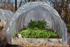 Building Small Garden Hoop Houses out of Electrical Conduit❤❤❤ Portable Greenhouse, Build A Greenhouse, Indoor Greenhouse, Greenhouse Gardening, Greenhouse Ideas, Underground Greenhouse, Cheap Greenhouse, Gardening Tips, Fruit Garden