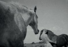 Oleg Kulik - Horses of Bretagne Saatchi Gallery, Galleries In London, Contemporary Art, Art Gallery, Horses, Pop, Artist, Animals, Pictures