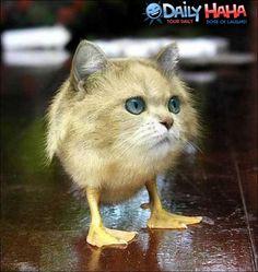 Half Cat Half Dog Hybrid | Half Cat, Half Duck | Funny Pictures
