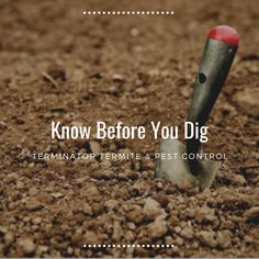Termite Pest Control, Termite Damage, Did You Know, Knowing You, Foundation, Activities, Learning, Blog, Blogging