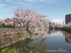 Odawara Castle Park located Odawara city Kanagawa pref Japan