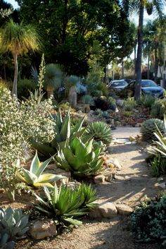 driveby agave garden on A Growing Obsession blog