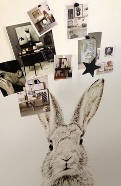 Magnetic Wallpaper - Rabbit - 2 Sizes - 5 magnets included