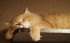 Chronic Fatigue Syndrome - It's Worse than Multiple Sclerosis - and Fibromyalgia is No Walk in the Park Either - Health Rising Silly Cats, Cats And Kittens, Cute Cats, Funny Cats, Funny Animals, Cute Animals, Chronic Fatigue, Chronic Illness, Chronic Pain